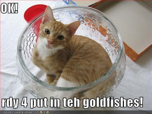 rdy4goldfishes