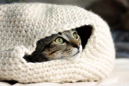 CatNest