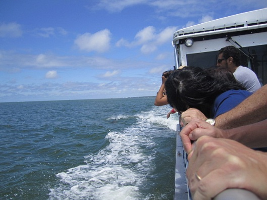 Actually, we were sort of chased by dolphins too.  ;)  They often love to jump the wake.