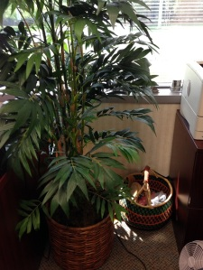 My silk tree covers up all the unslightly cords trailing off the back of my desk and stands guard over a woven African basket containing yarn and a pair of moccasins for when bad weather has left me with cold, wet feet.